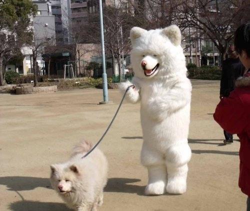 Dog Walking Dog Photo