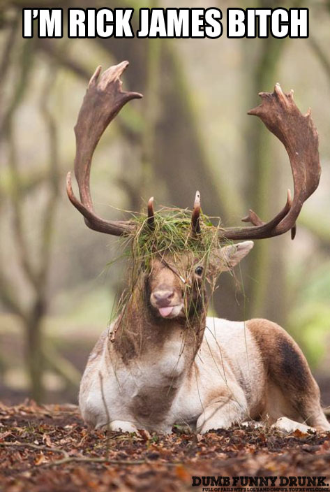Rick James Deer