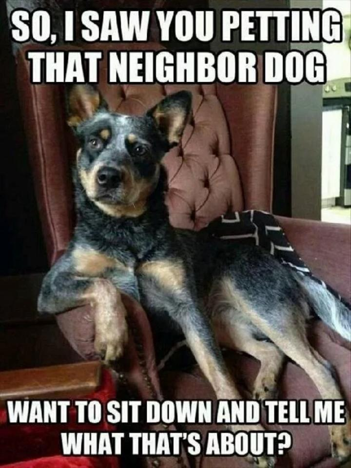 Why You Petting The Neighbor Dog