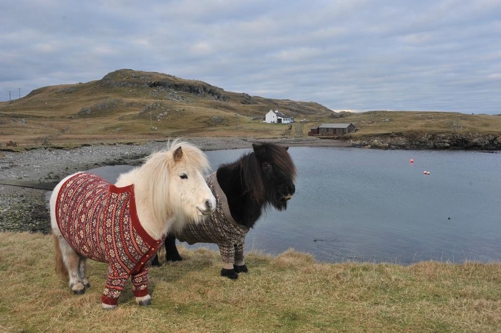 Mini Horses In Cardigans